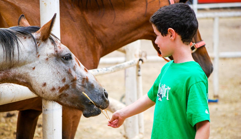 Camper feeding a horse